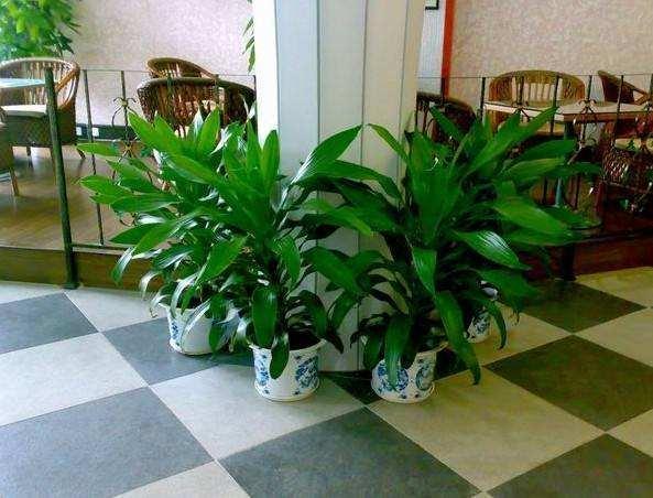 办公室设计装修摆放盆栽的作用有哪些